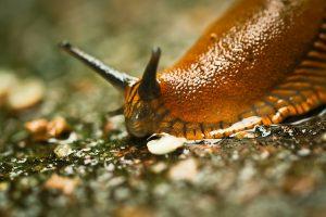 Schnecken und Wespen im Garten