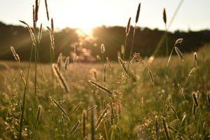 Sunrise Meadow Morning Nature  - polalinaa / Pixabay