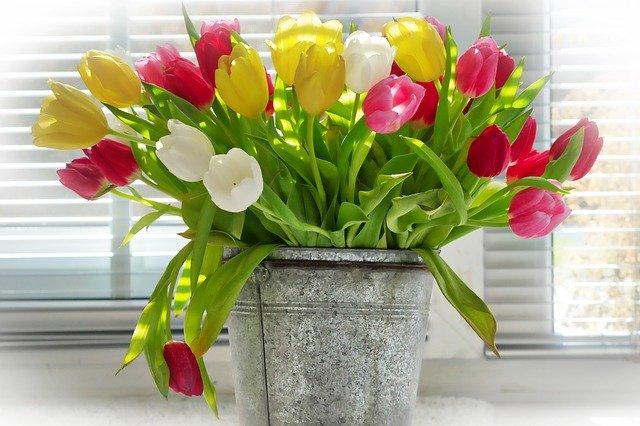 8 Tipps von Oma, damit Tulpen länger halten