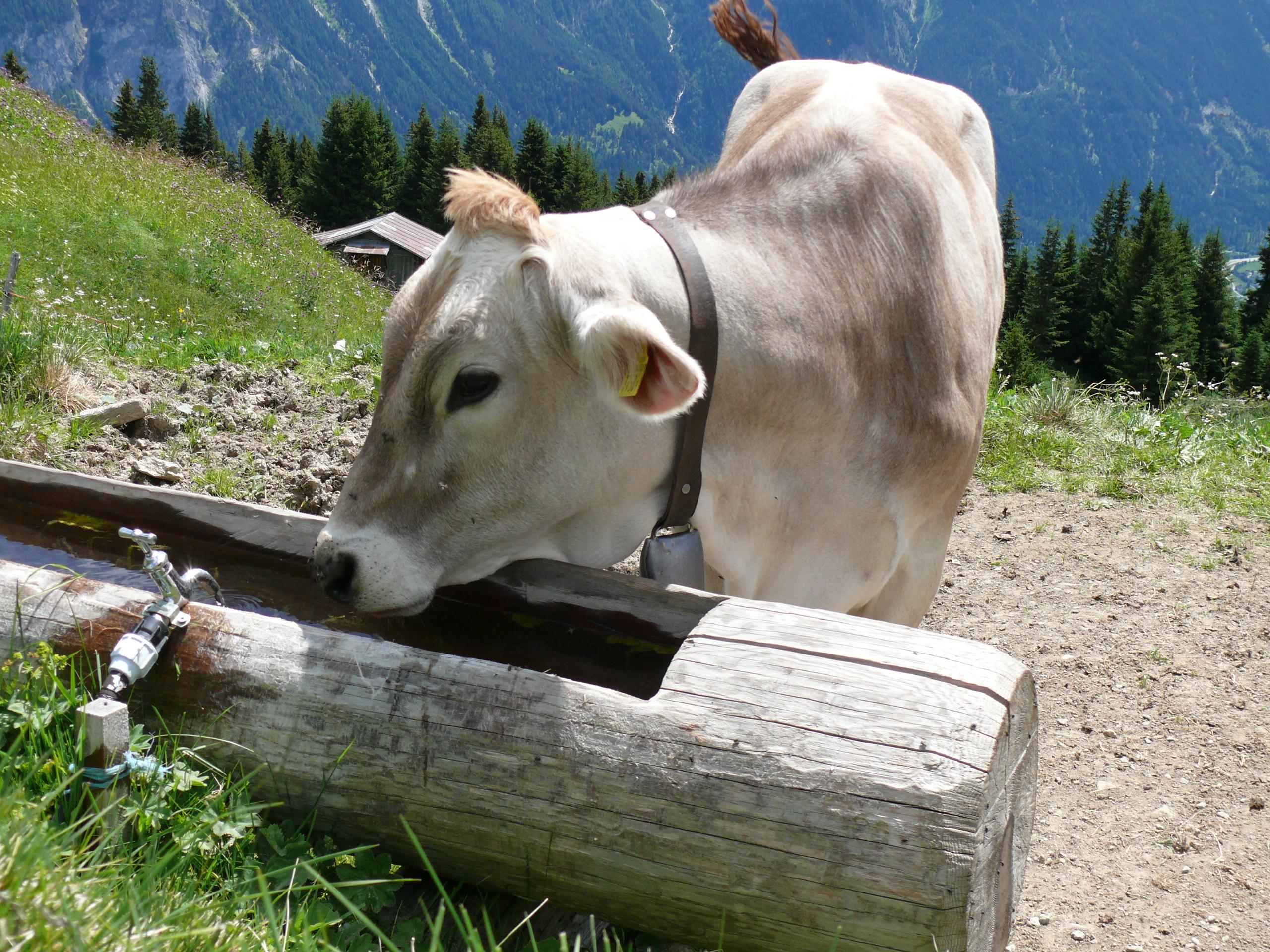 Alternative Jobs Schweiz