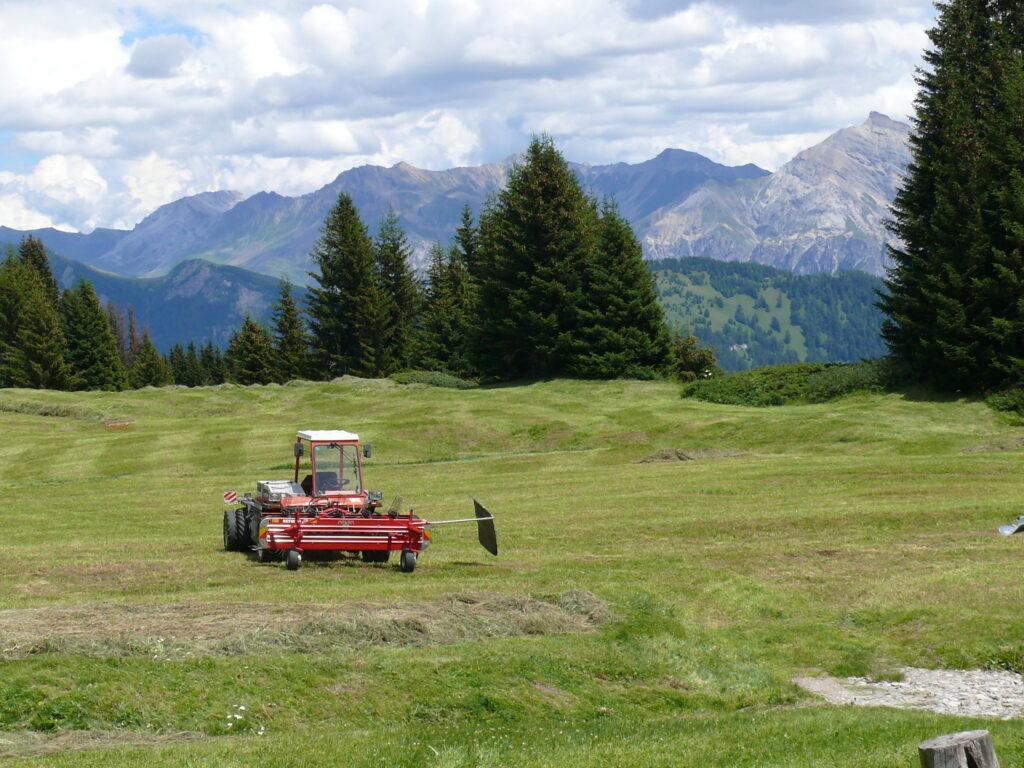 Bergheuen Graubünden